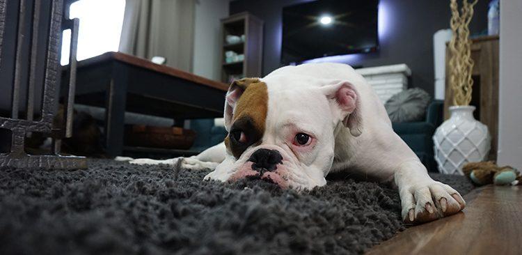 Dog Bite Atlanta Lawyer